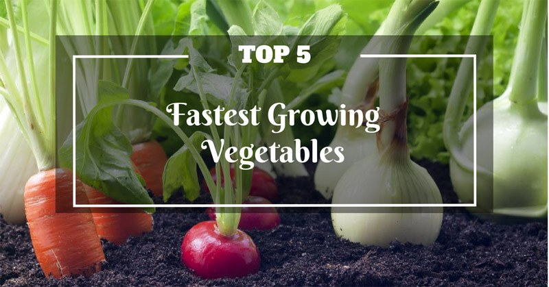 Fastest Growing Vegetables