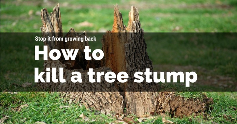 How to kill a tree stump
