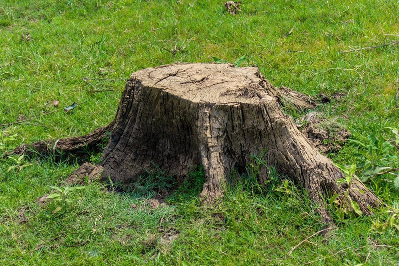 stump on green grass graden