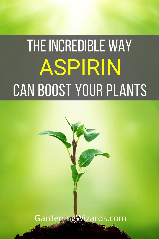 Does Aspirin Help Your Plants Grow