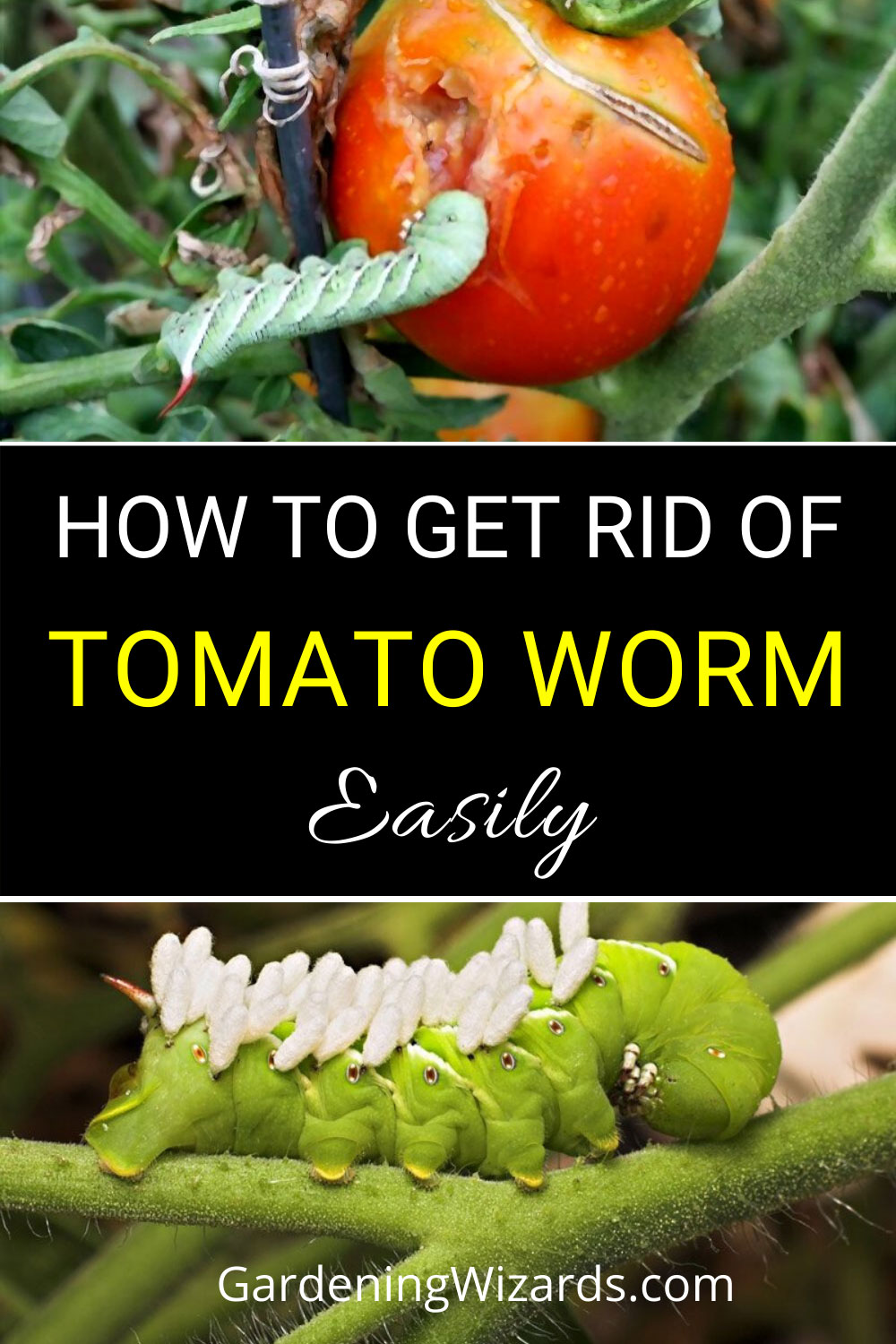 How To Get Rid Of Tomato Worms
