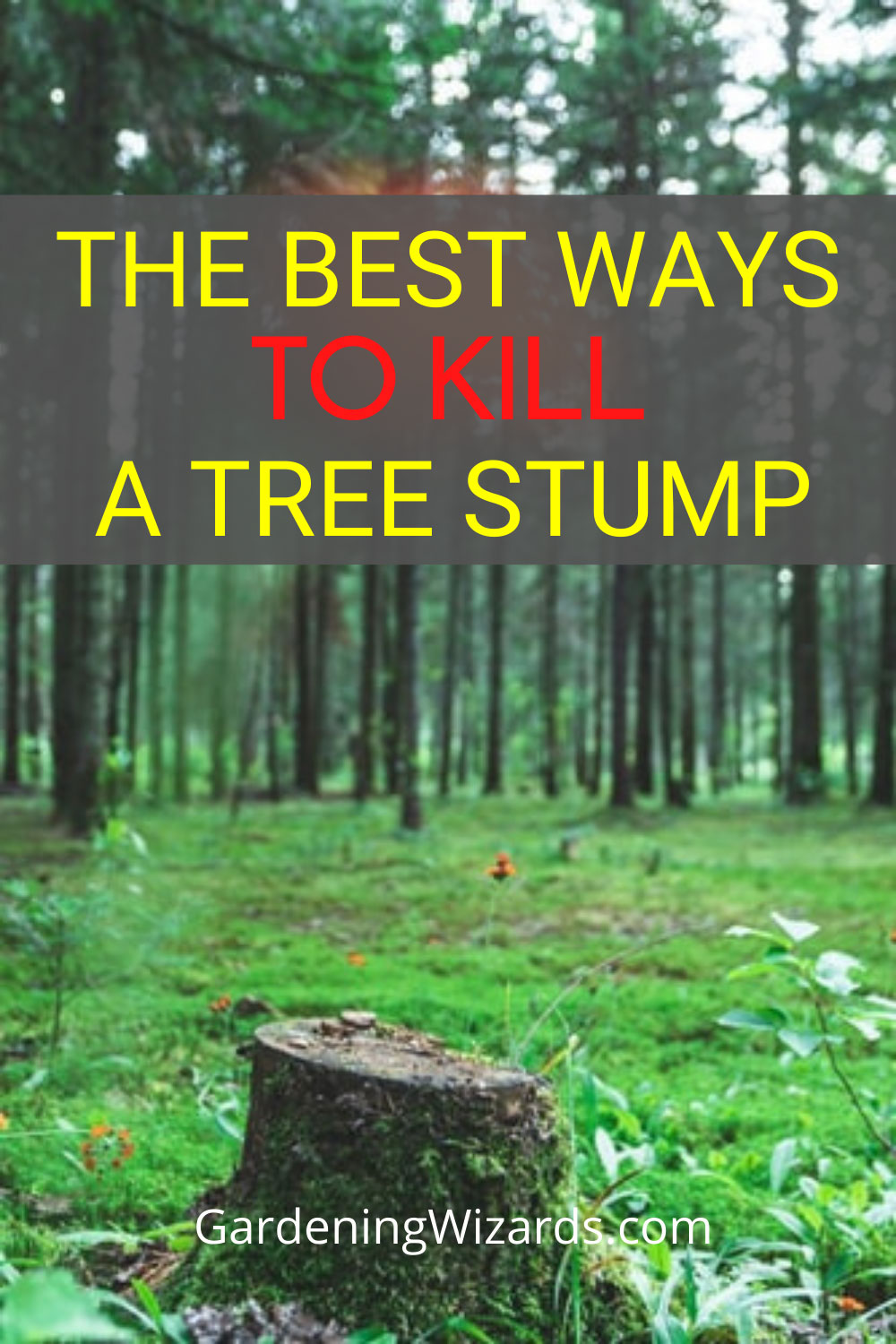 kill a tree stump