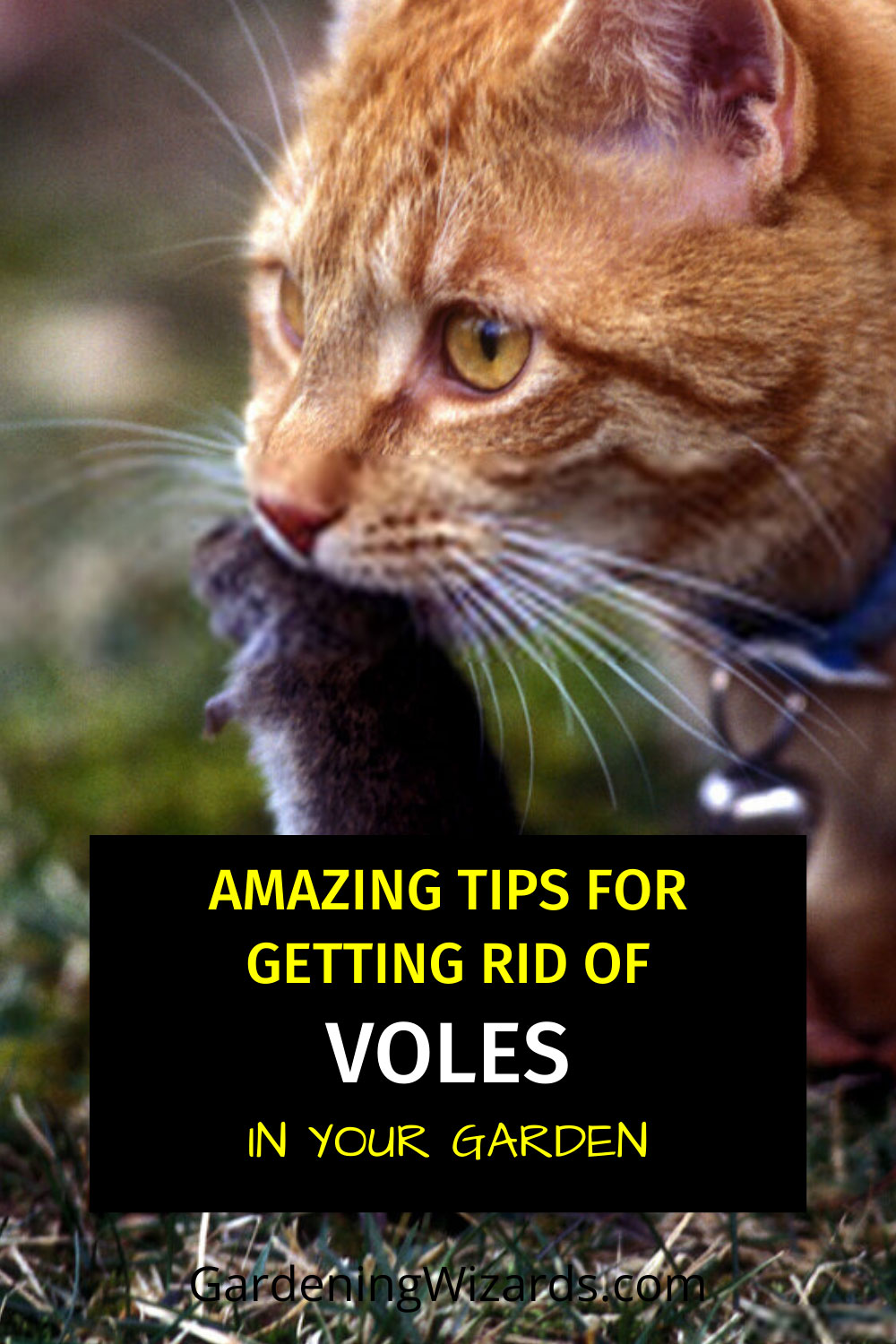 How To Get Rid Of Voles