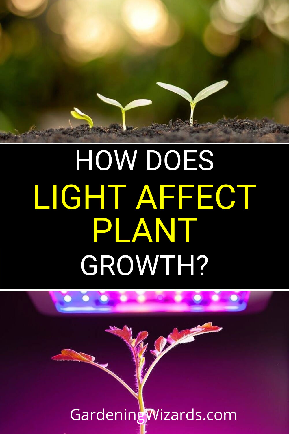 Light Affect Plant Growth