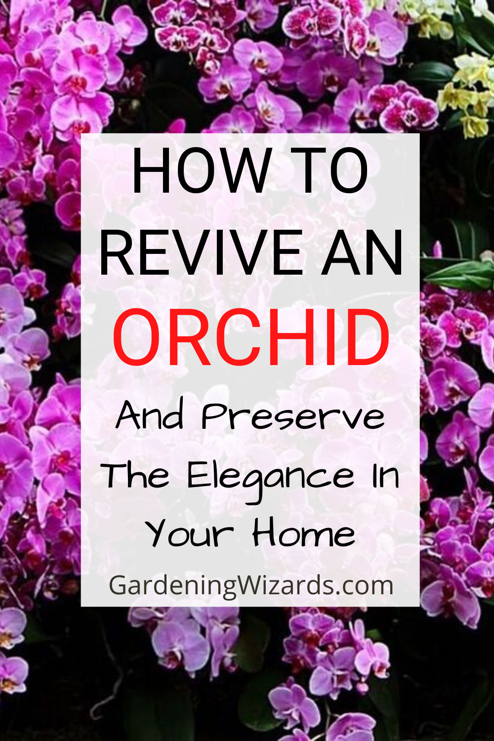 How to Revive An Orchid